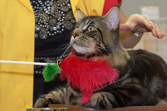 Сколько раз в день кормить кота: рекомендации, особенности